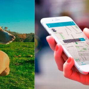 GPS para localizar mascotas
