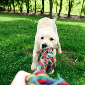 Juguetes y entretenimiento para mascotas