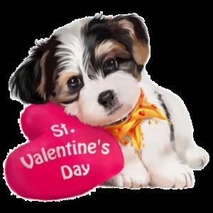 San Valentín / Amor Mascota