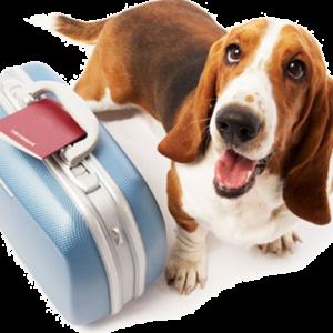 Accesorios viajar con mascotas