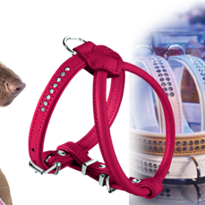 Collares, arnés y cinchas para Mascotas