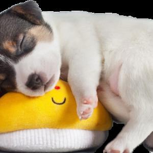 Camas, Mantas y complementos para que duerma tu Mascota