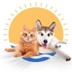 Productos de Verano para mascotas